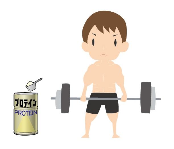 20160901 運動とタンパク質摂取