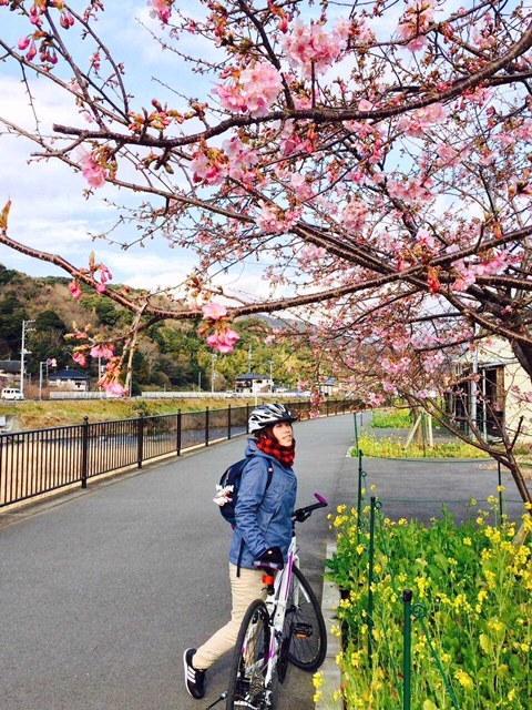 写真:初自転車旅行、河津で日本一早い桜狩り